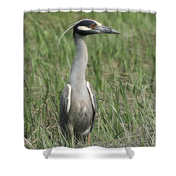 Shower Curtain featuring the photograph Night Heron In Profile by William Selander