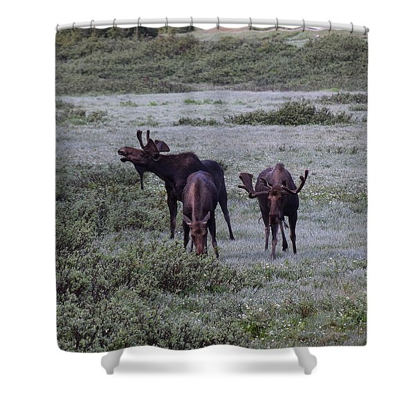 Moose Cameron Pass Co Shower Curtain
