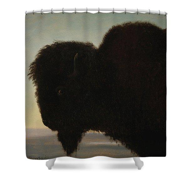 Bull Buffalo Shower Curtain