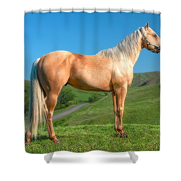 A Horse Named Shaker Shower Curtain