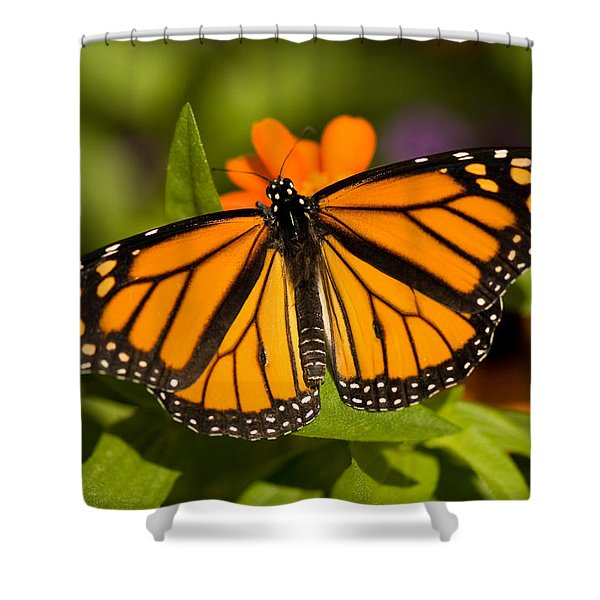 A Monarch Butterfly At The Lincoln Shower Curtain