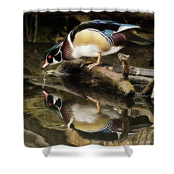 A Sip For You And Me Wildlife Art By Kaylyn Franks Shower Curtain