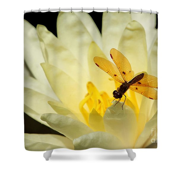 Amber Dragonfly Dancer 2 Shower Curtain