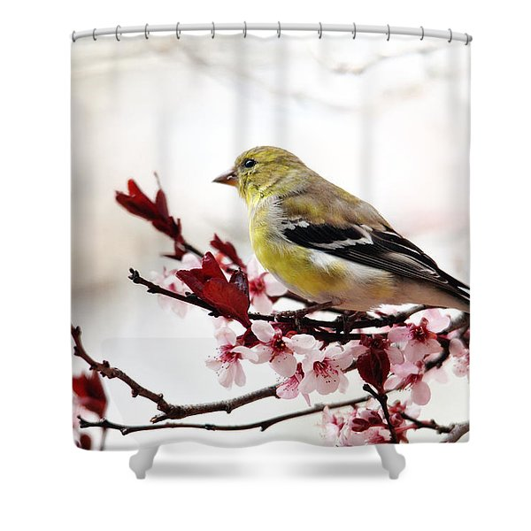 American Goldfinch In Spring Shower Curtain