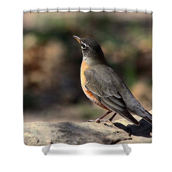 American Robin On Rock Shower Curtain