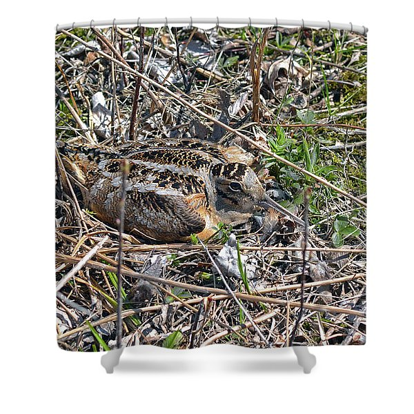 American Woodcock Incubating Her Chicks Shower Curtain