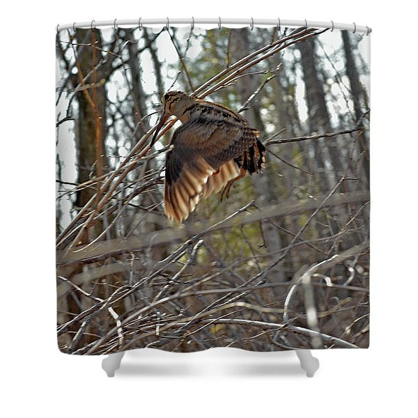 American Woodcock's Flight When She Has Chicks Shower Curtain