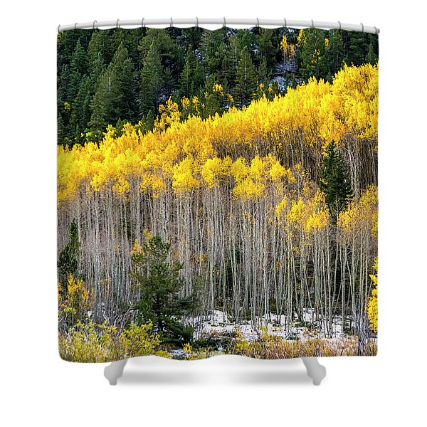 Aspen Trees In Fall Color Shower Curtain