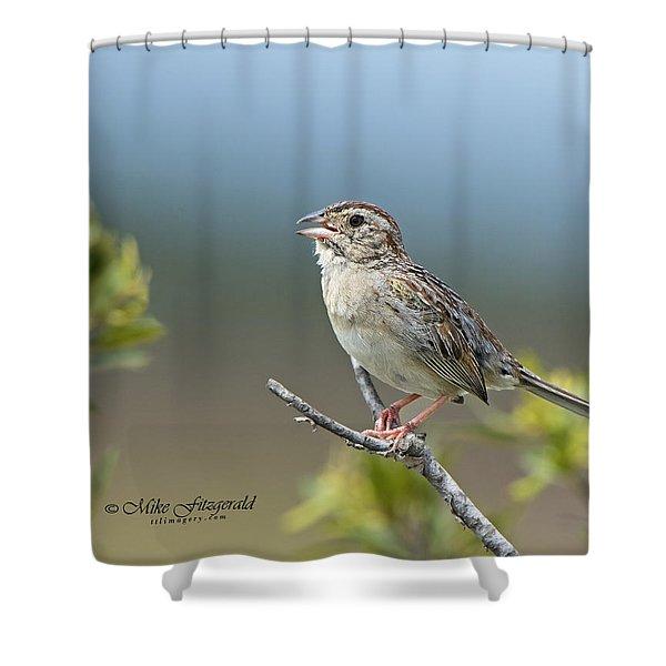 Bachman Sparrow Shower Curtain
