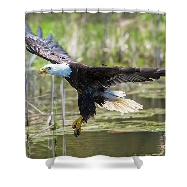 Bald Eagle-3175 Shower Curtain