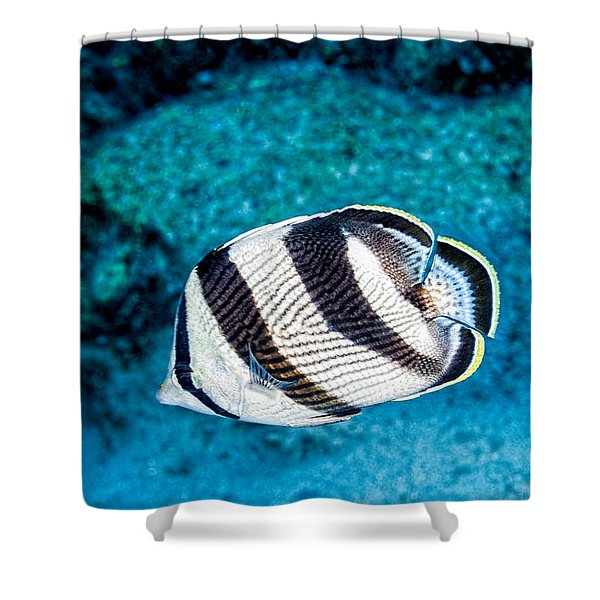 Shower Curtain featuring the photograph Banded Butterflyfish by Perla Copernik