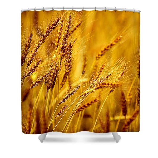 Bearded Barley Shower Curtain