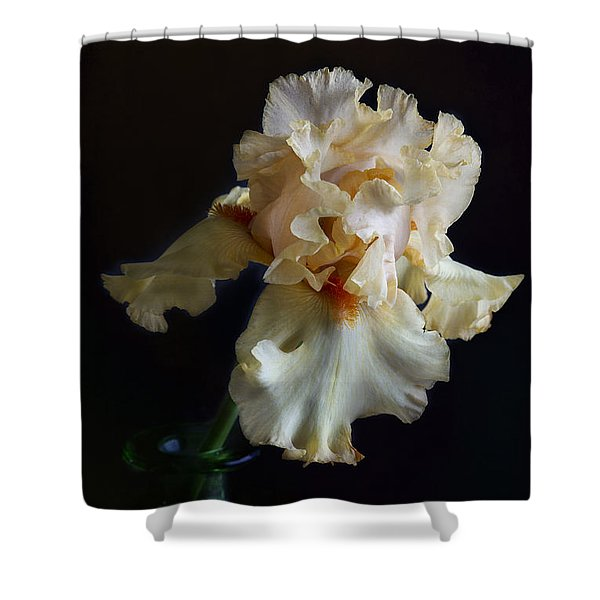 Bearded Iris 4 Shower Curtain