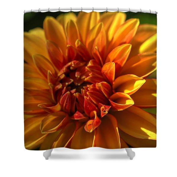 Beautiful Dahlia 4 Shower Curtain