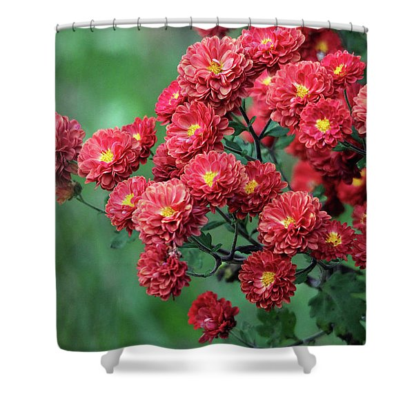 Beautiful Red Mums Shower Curtain