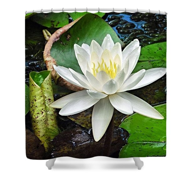 #beautiful #water #lily At Mayfield Shower Curtain
