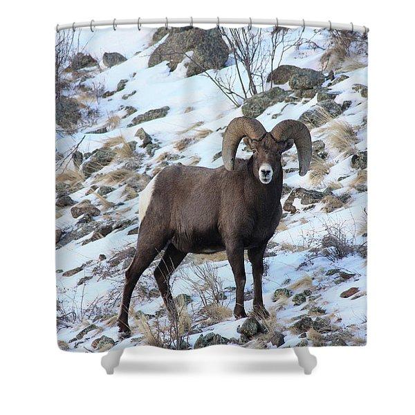 Bighorn7 Shower Curtain