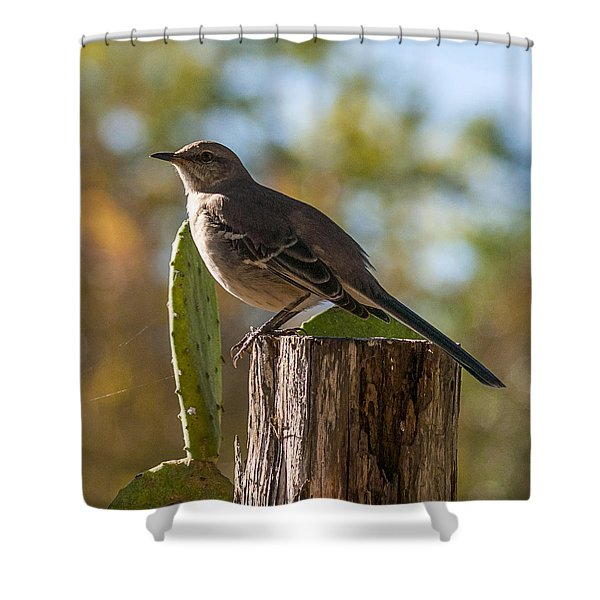 Bird On A Post Shower Curtain