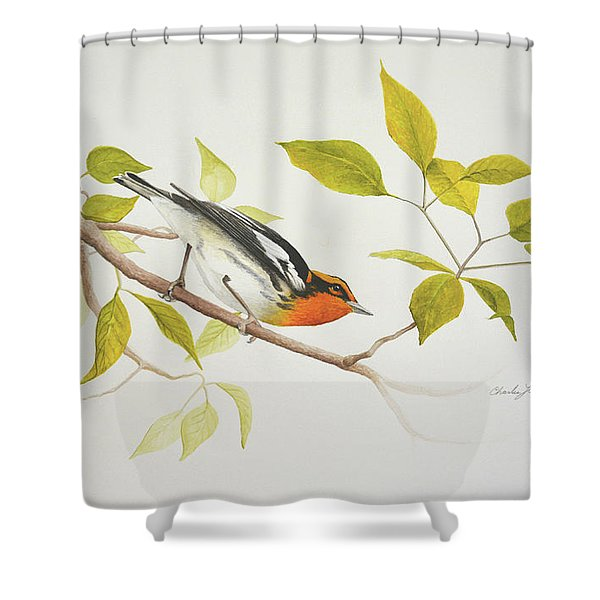 Blackburnian Warbler Shower Curtain