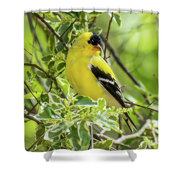 Shower Curtain featuring the photograph Blending In by Robert L Jackson
