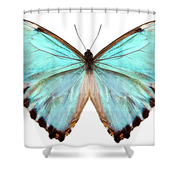 blue butterfly species Morpho portis thamyris Shower Curtain
