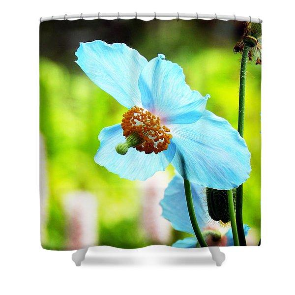 Blue Poppy Shower Curtain