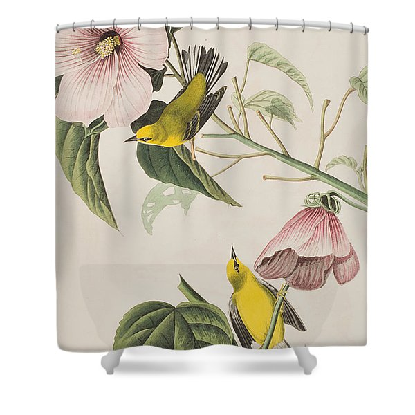 Blue-winged Yellow Warbler  Shower Curtain