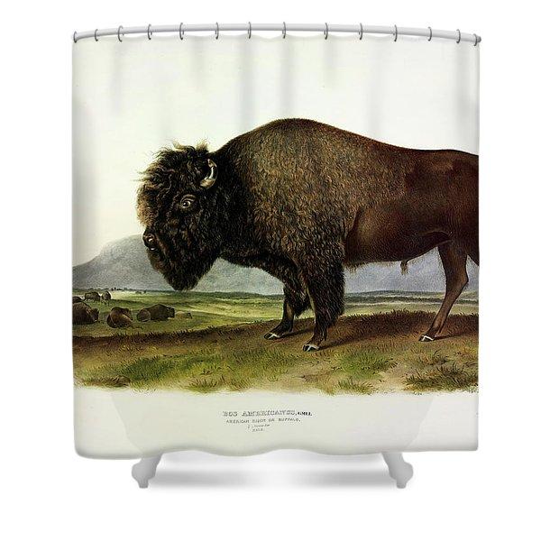 Bos Americanus, American Bison, Or Buffalo Shower Curtain