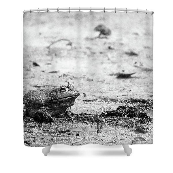 Bull Frog Shower Curtain
