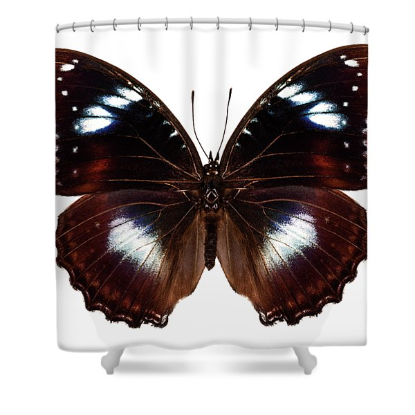 Butterfly Species Hypolimnas Bolina  Shower Curtain