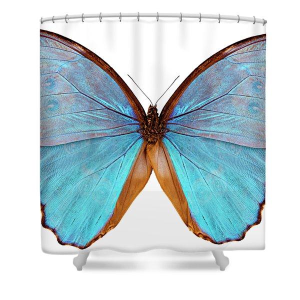 Butterfly Species Morpho Godarti Assarpai Shower Curtain