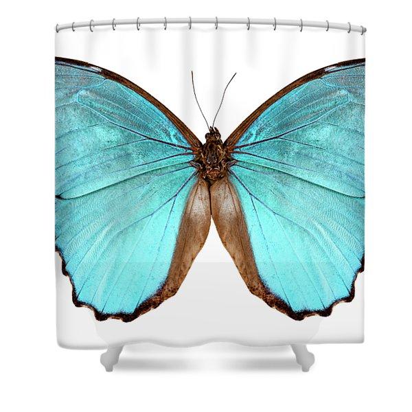 Butterfly Species Morpho Menelaus Alexandrovna Shower Curtain