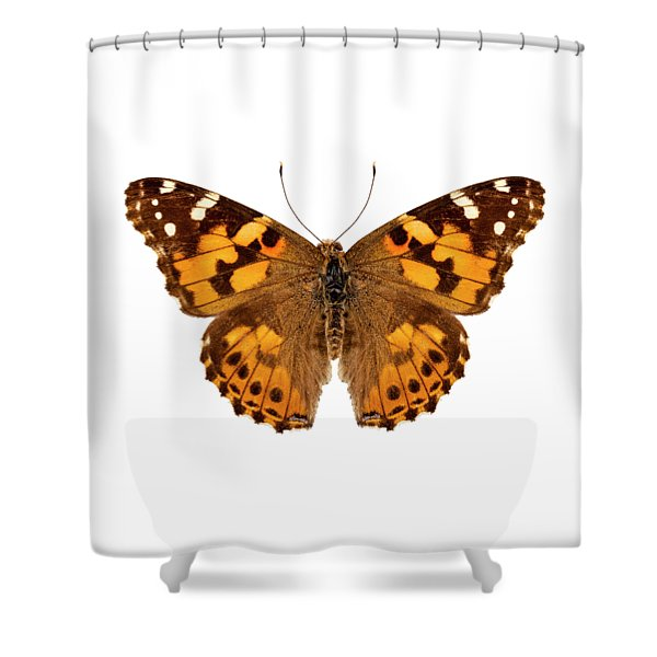 Butterfly Species Vanessa Cardui  Shower Curtain