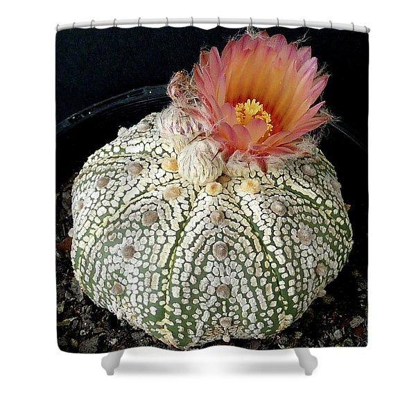 Cactus Flower 4 Shower Curtain
