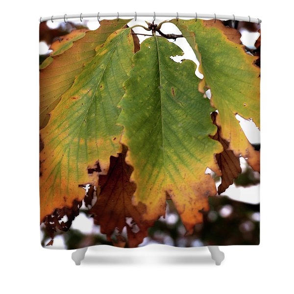 Changing Leaves Shower Curtain