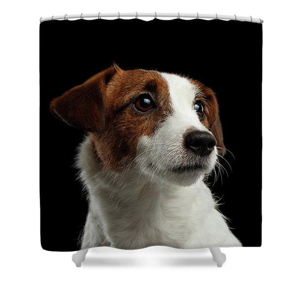 Closeup Portrait Of Jack Russell Terrier Dog On Black Shower Curtain