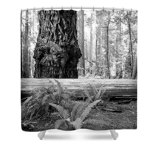Coastal Redwoods  Shower Curtain
