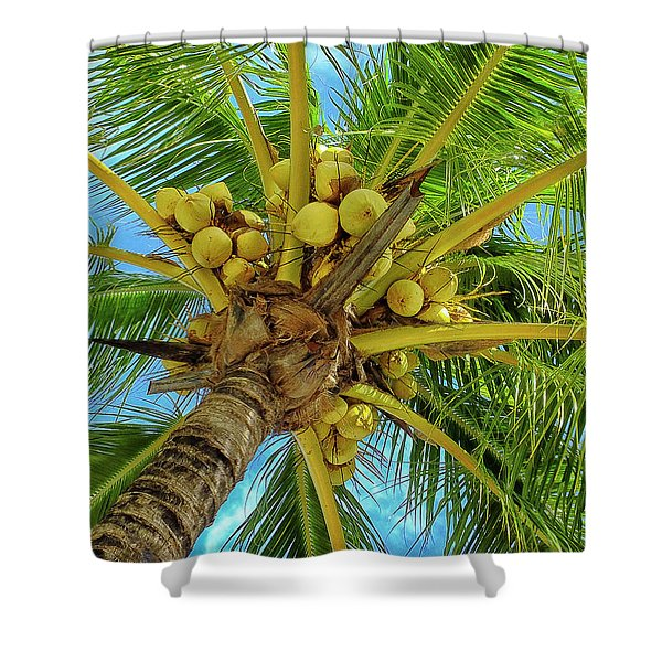 Coconuts In Tree Shower Curtain