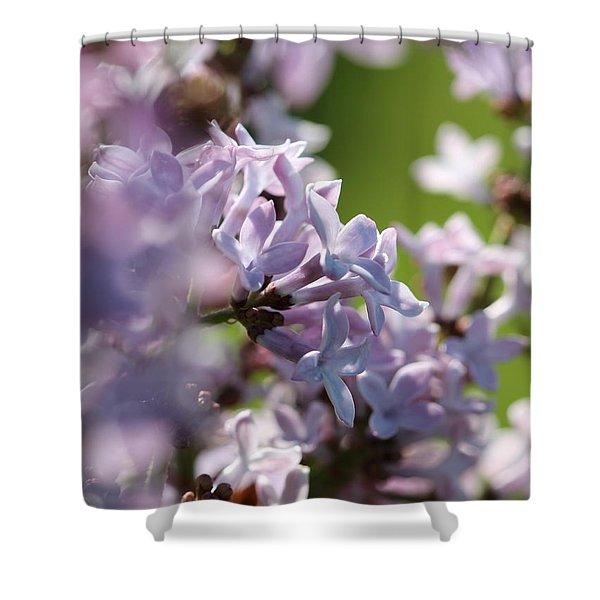 Common Purple Lilac Shower Curtain