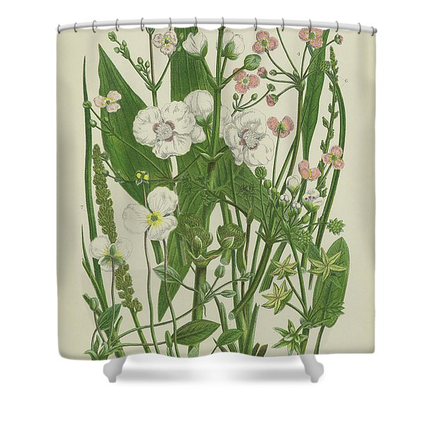 Common Star Fruit, Greater Water Plantain And Other Plants Shower Curtain