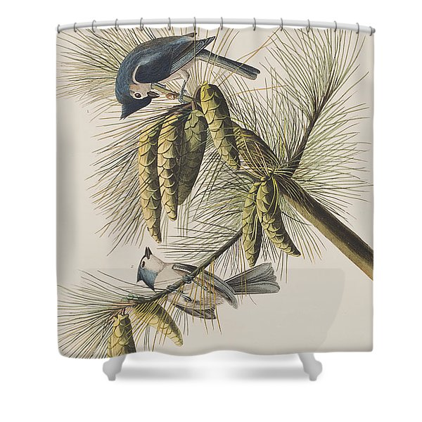 Crested Titmouse Shower Curtain