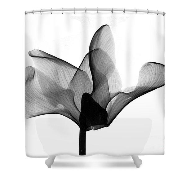 Cyclamen Flower X-ray Shower Curtain