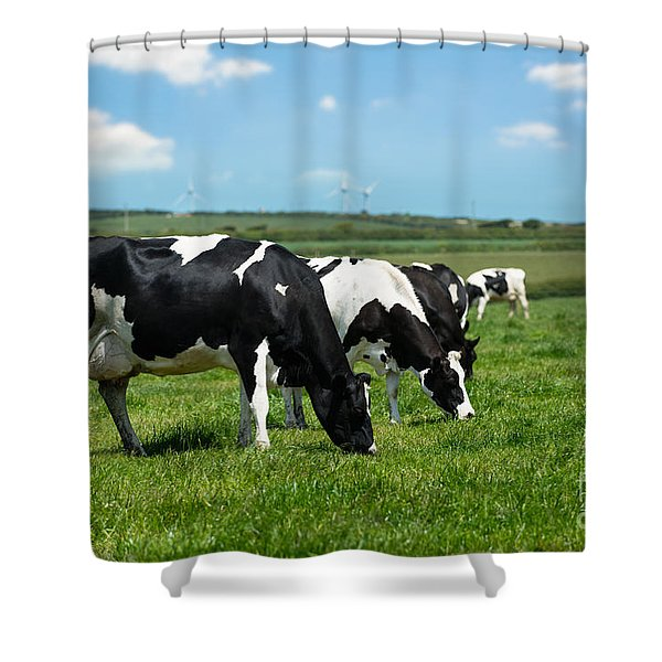 Dairy Cows In Cornwall Shower Curtain