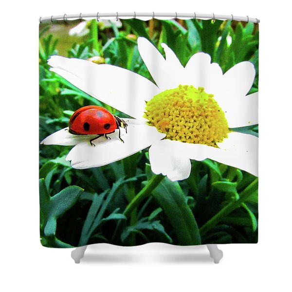 Daisy Flower And Ladybug Shower Curtain