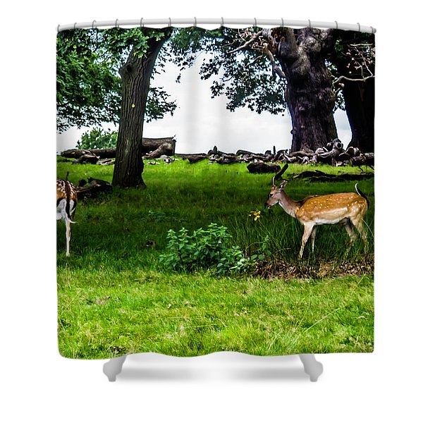 Deer In The Park Shower Curtain