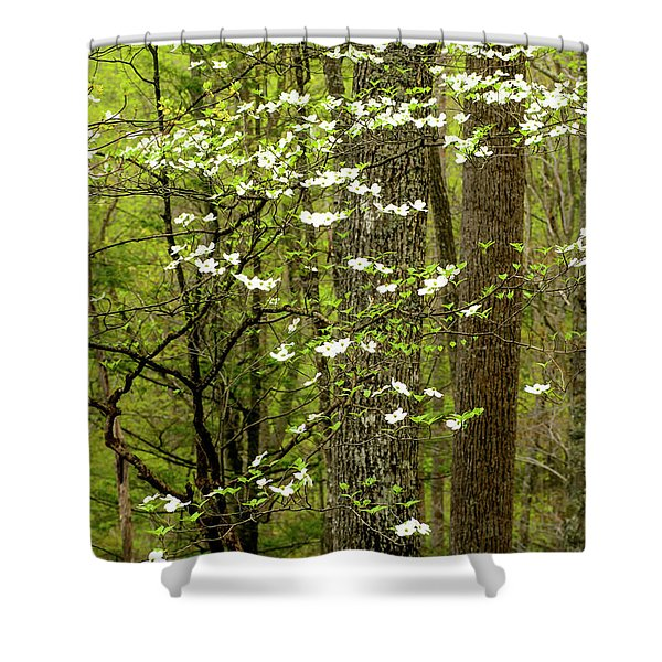 Dogwood Blooming In Forest Shower Curtain
