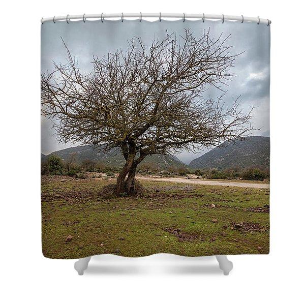 Dry Tree Shower Curtain