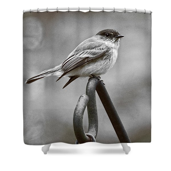 Shower Curtain featuring the photograph Eastern Phoebe by Robert L Jackson