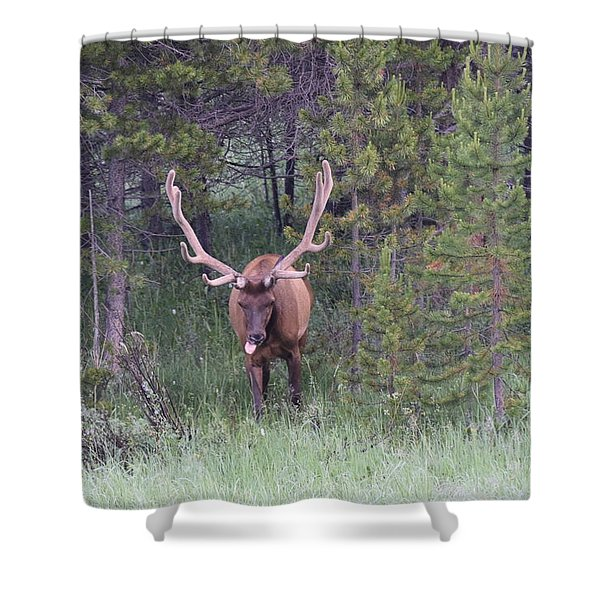 Bull Elk Rocky Mountain Np Co Shower Curtain