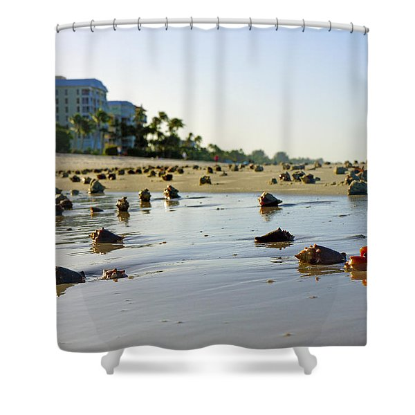 Fighting Conchs On The Beach In Naples, Fl Shower Curtain